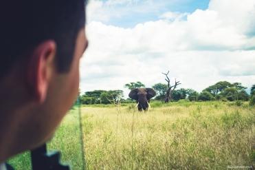 First elephant sight!