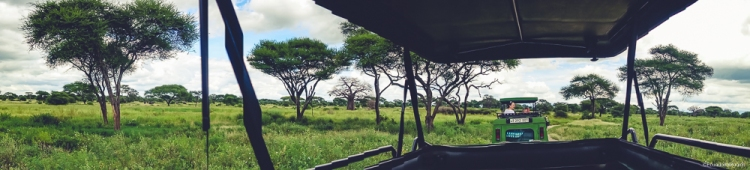 safari-africa