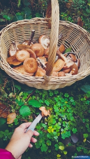 Chiodini mushrooms