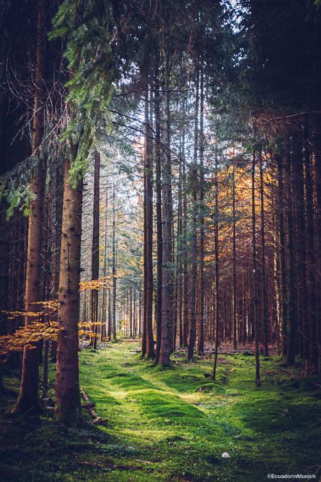 Forest near Munich