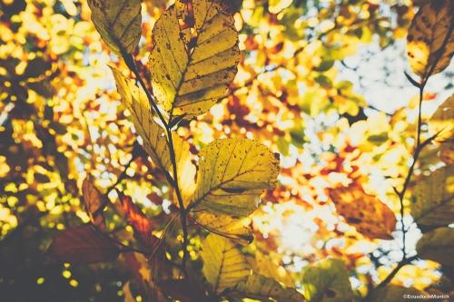 munich-autumn-6