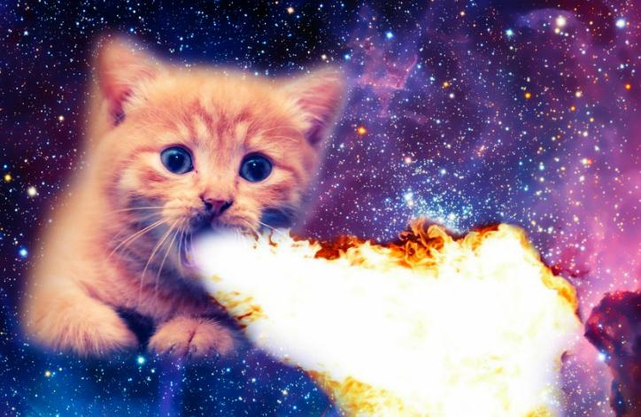 Cat Meme.PNG