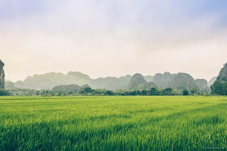 Vietnam (4)