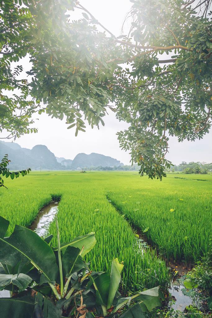 Vietnam (6)
